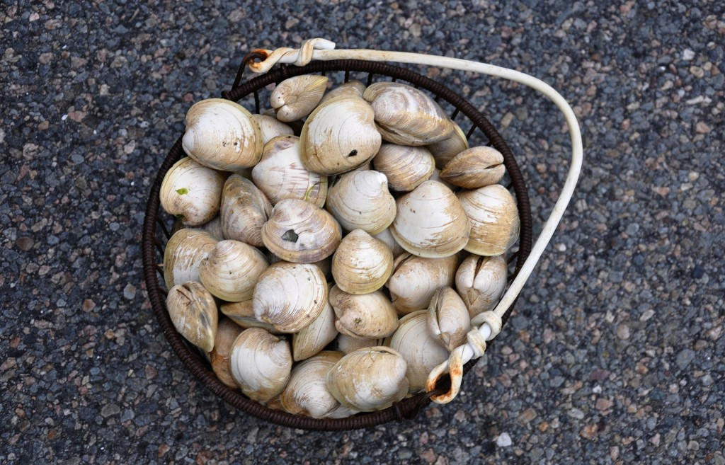 For seafood lovers, Cape Cod offers abundant opportunities for clamming and crabbing.